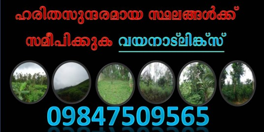 50 Cent Land with House for Sale at Choothupara, Wayanad Price -16 Lakhs