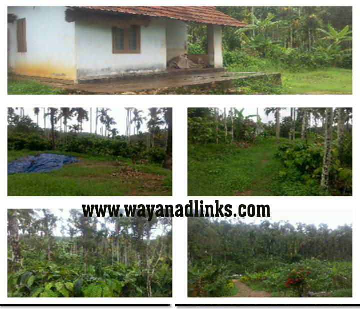 10 Acre Mixed Agricultural Land with Small House for Sale at Thomattuchal, Wayanad