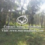 Land for sale wayanad