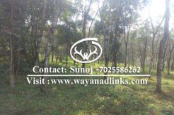 Land for sale wayanad