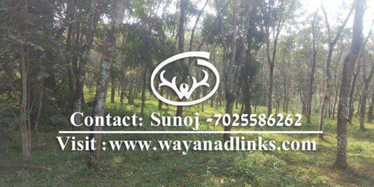 4 Acre Rubber Plantation Land for Sale at Kenichira , Wayanad. 20 Lakhs/Acre