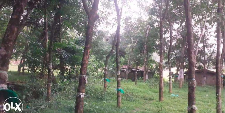 282057495_3_1000x700_urgent-sale-20-cent-land-35m-frm-nh47-in-chirangarathrissur-angamaly-land-plots