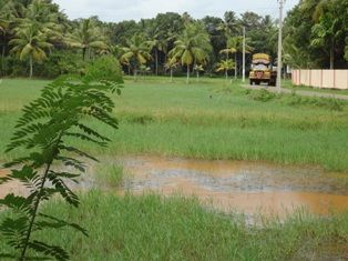 1 Acre Agricultural Land road facing for Sale in Kayamkulam, Alappuzha