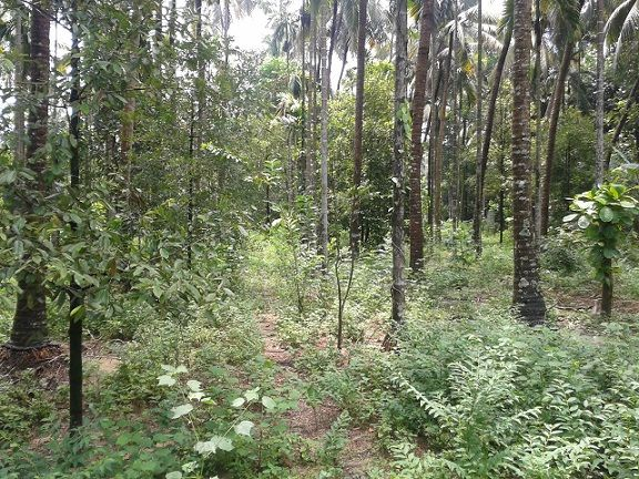 1 Acres Land for Sale in Arimbur, near ship churchThrissur