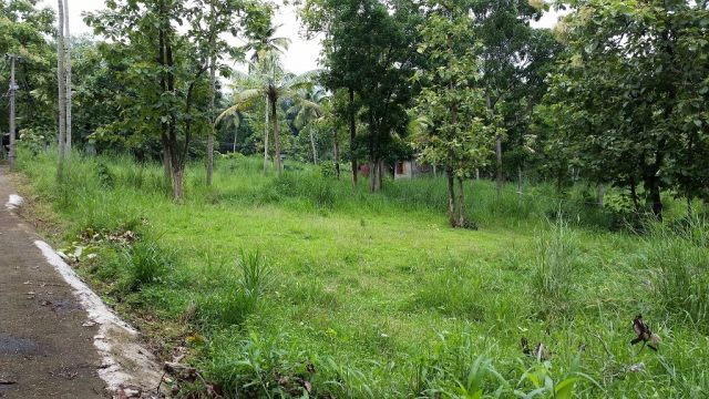73 cent plot for sale(Full/Part) in Chengannur. Price: 3 lakhs/cent