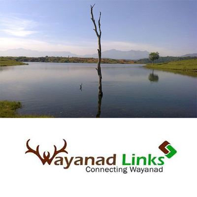 1.50 Acre land for sale in Wayanad