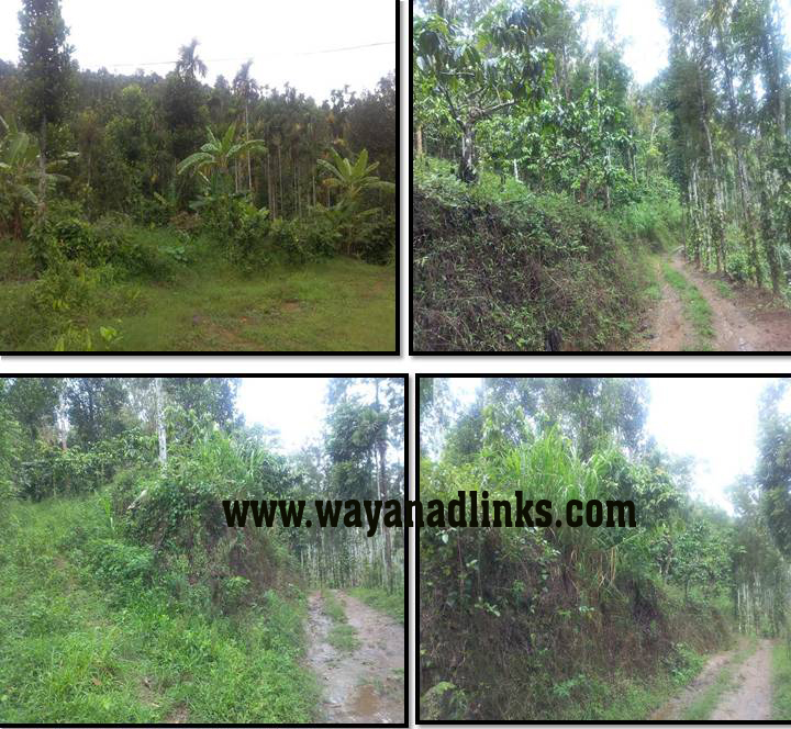 7 Acre Agricultural Land For Sale at Ambalavayal, Wayanad