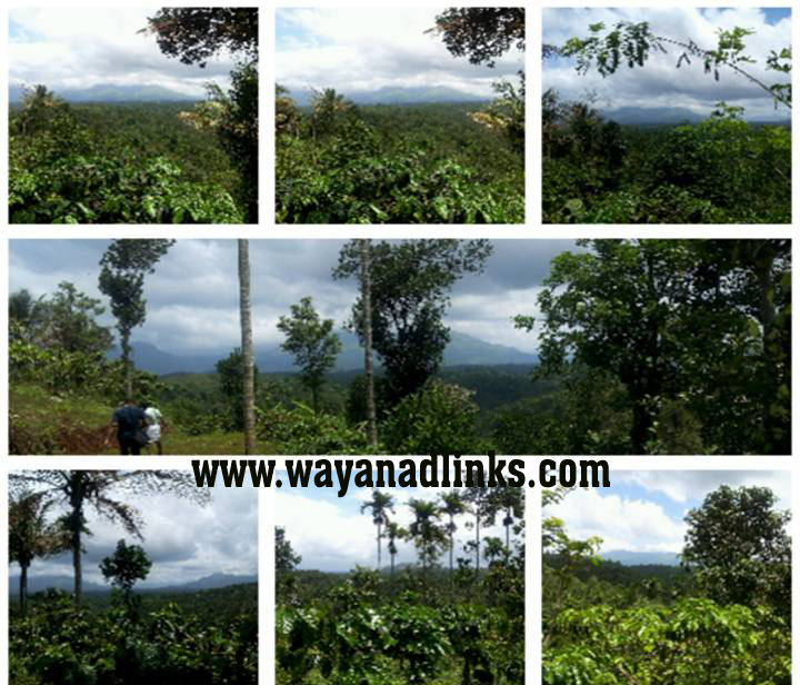 8 Acre Mixed Agricultural Land with 1500sq.ft House for Sale at Vaduvanchal Wayanad