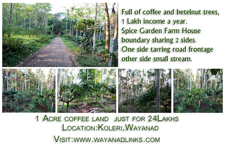 1 Acre Land for Sale at Koleri near Spice Garden Farm House Wayanad