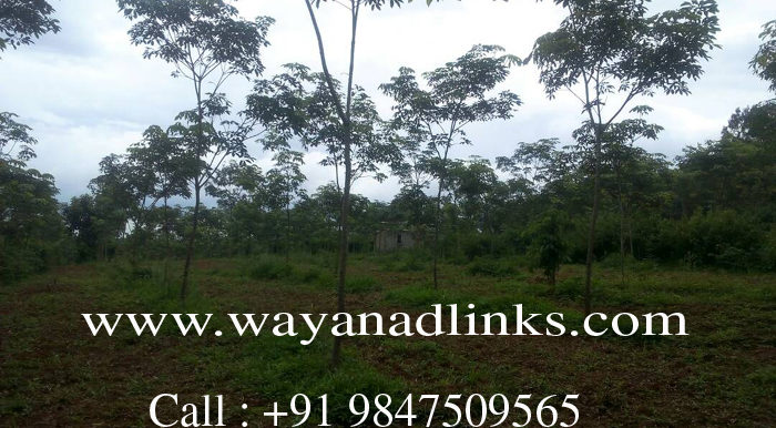 3 Acre Rubber plot for sale at kenichira,7 copy