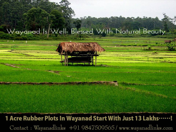 1 Acre Agricultural Land For Sale at Manalvayal, Kenichira, Wayanad