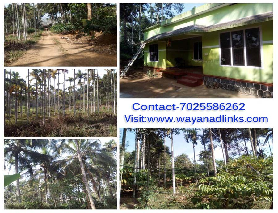 1 Acre Agricultural Land with House for Sale at Nadavayal, Wayanad