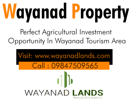 6 Acre Tea Plantation for Sale in Periya, Wayanad