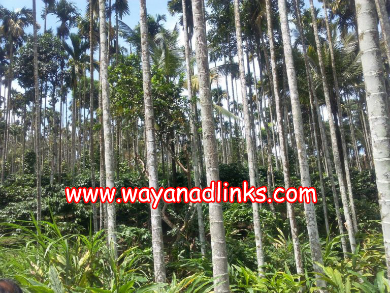 2 Acre Agricultural Land for Sale in Meenagadi, Wayanad
