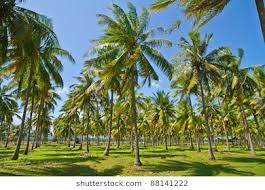 28 Cents of Coconut land for Sale at Trivandrum City