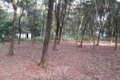 Property photo4