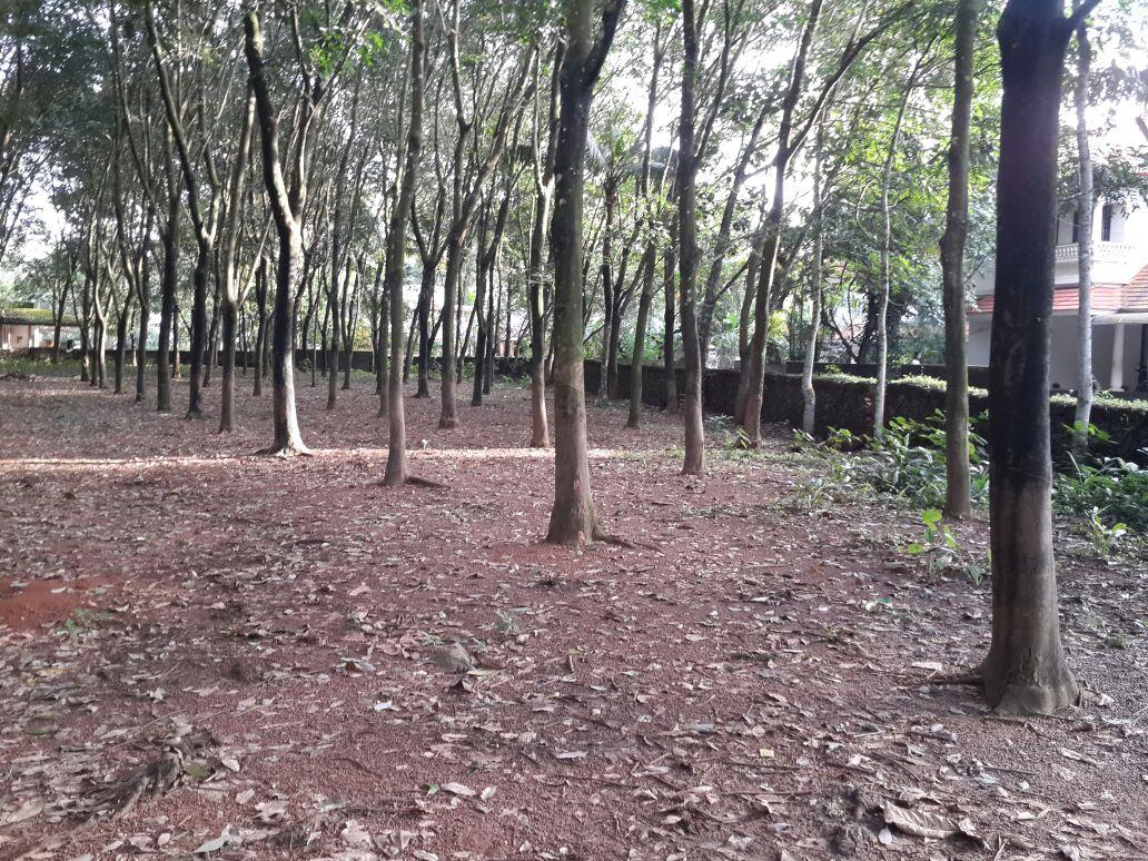 130 Cents of Prime Land for Sale at Njarallur near Pattimattom, Kizhakkambalam, Aluva