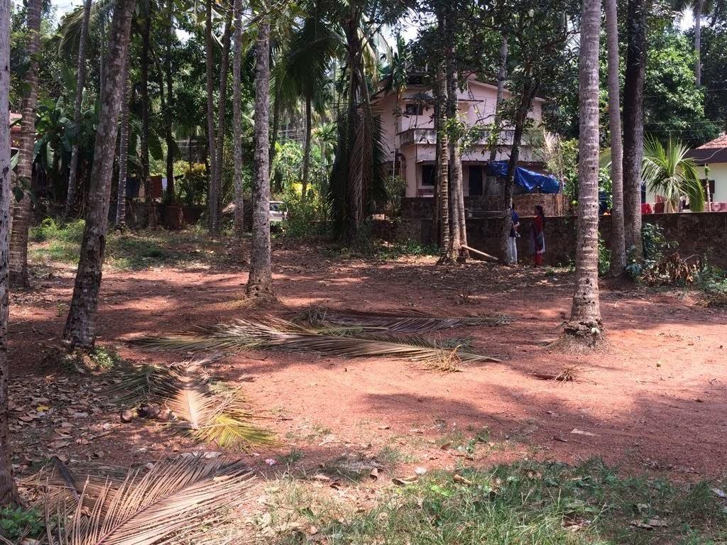 29 Cents of Plain Residential Plot for Sale at Kozhikode