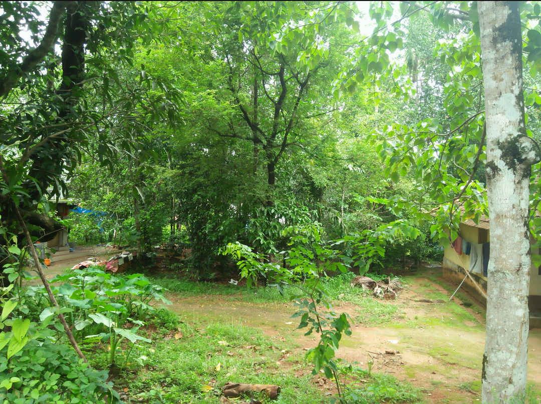5 Cents Residential Land for Sale Near Athani , Aluva