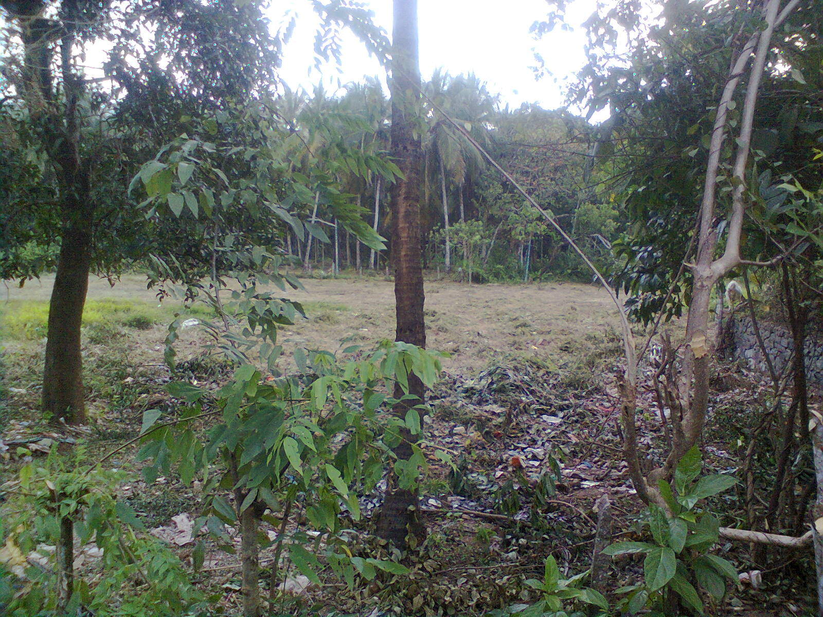 7.43 Cent House Plot for sale in Chandakkunnu, Nilambur, Malappuram
