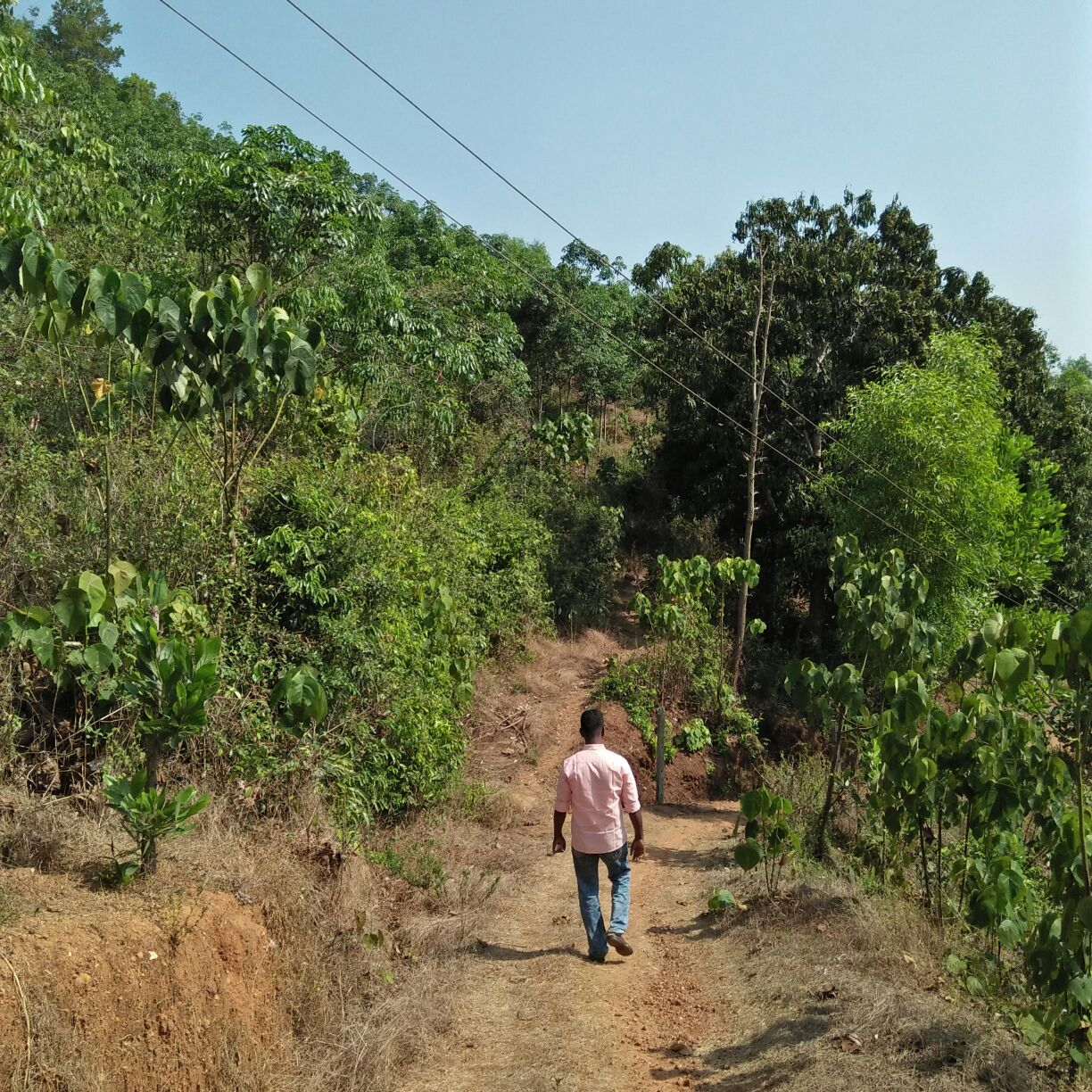 1 5 Acre Of Land Rubber Plantation With 3 Years Old Rubber
