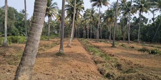 160  Cents Filled Land for Sale at Karumalloor, Ernakulam