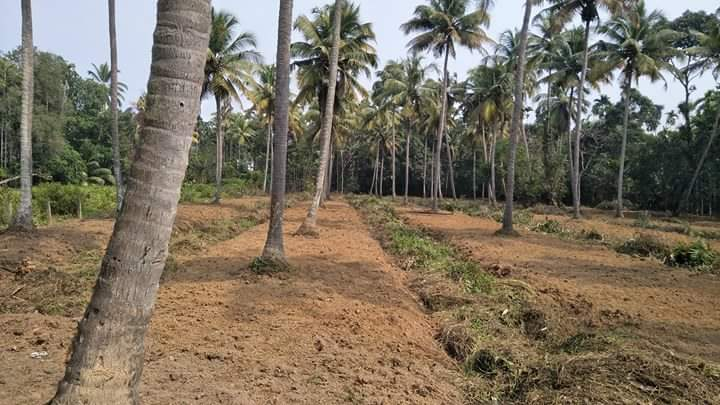 160  Cents Filled Land for Sale at Karumalloor, Ernakulam