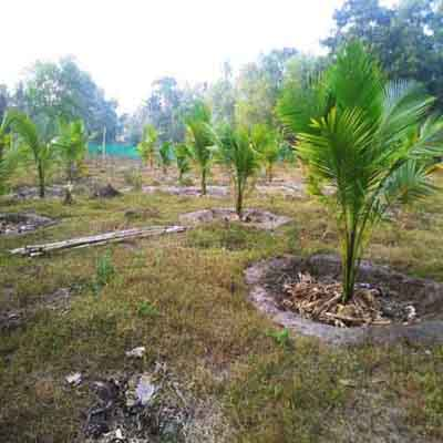 39 Cents Plot For Very Cheap Price Near Cherthala Town, Alappuzha