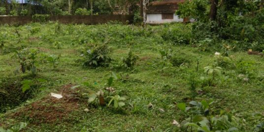 50 Cents Land (for Agriculture or Commercial Purpose) For Sale at Ezhamkulam,Adoor, Pathanamthitta
