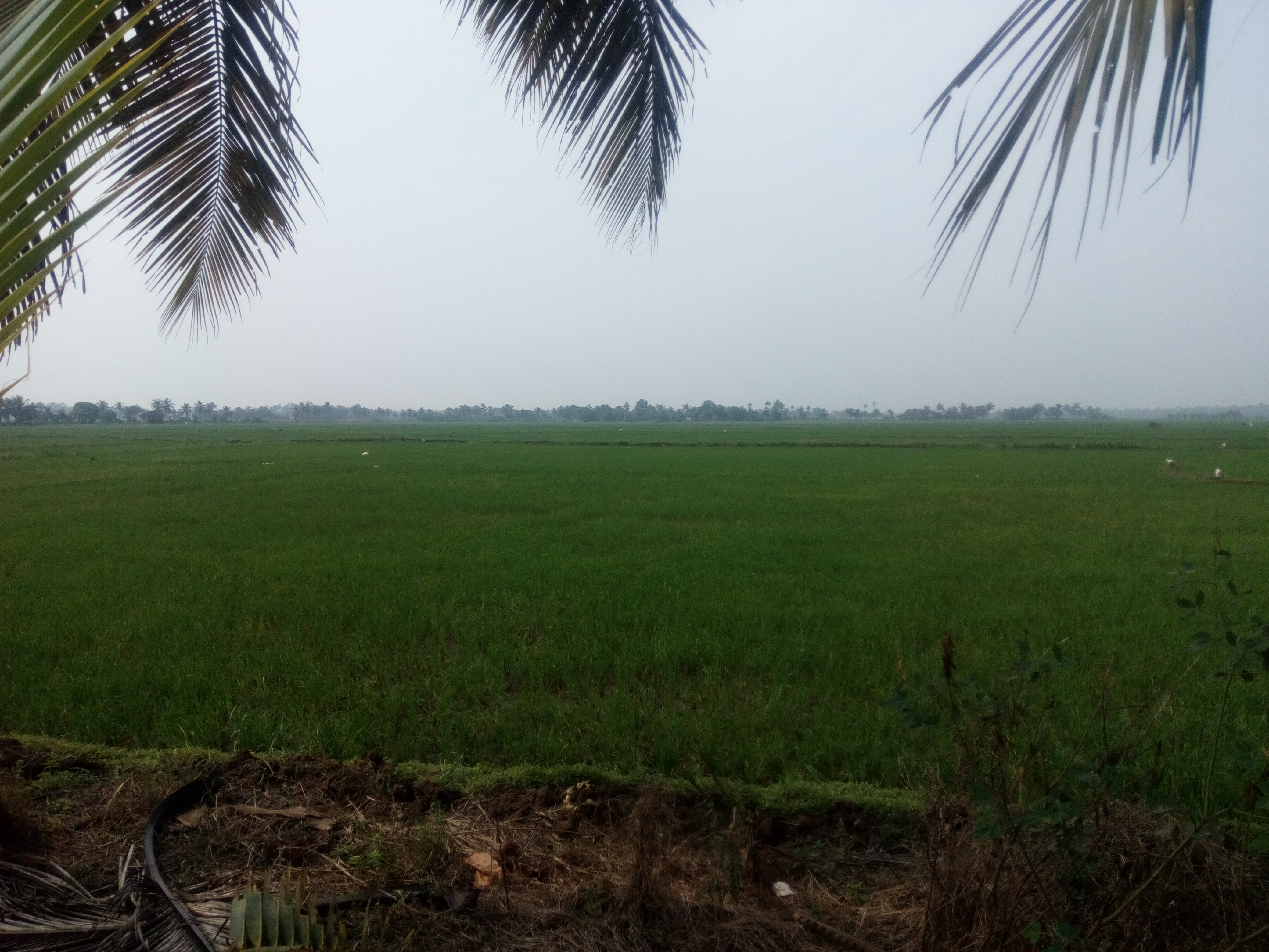 1 Acre Agriculture Land for Sale at Ezhumanthuruthu Near Vaikom