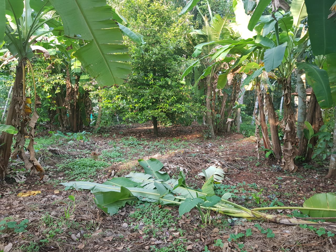 10 Cent Land For Sale In Kollakadavu – Allapuzha District