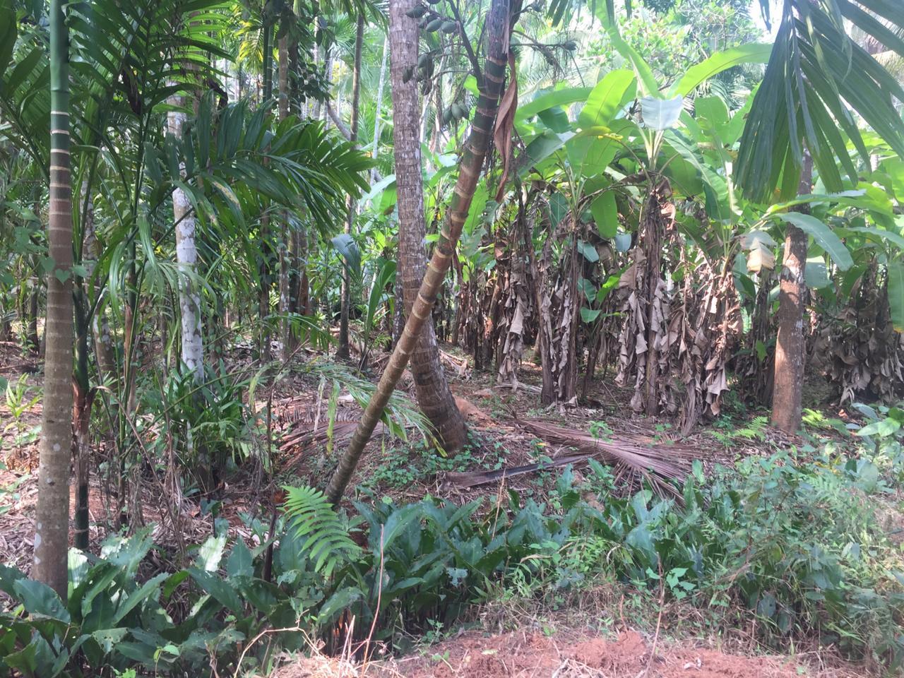 12 Cent Plot For Sale Behind Menapuram East UP School Mekunnu
