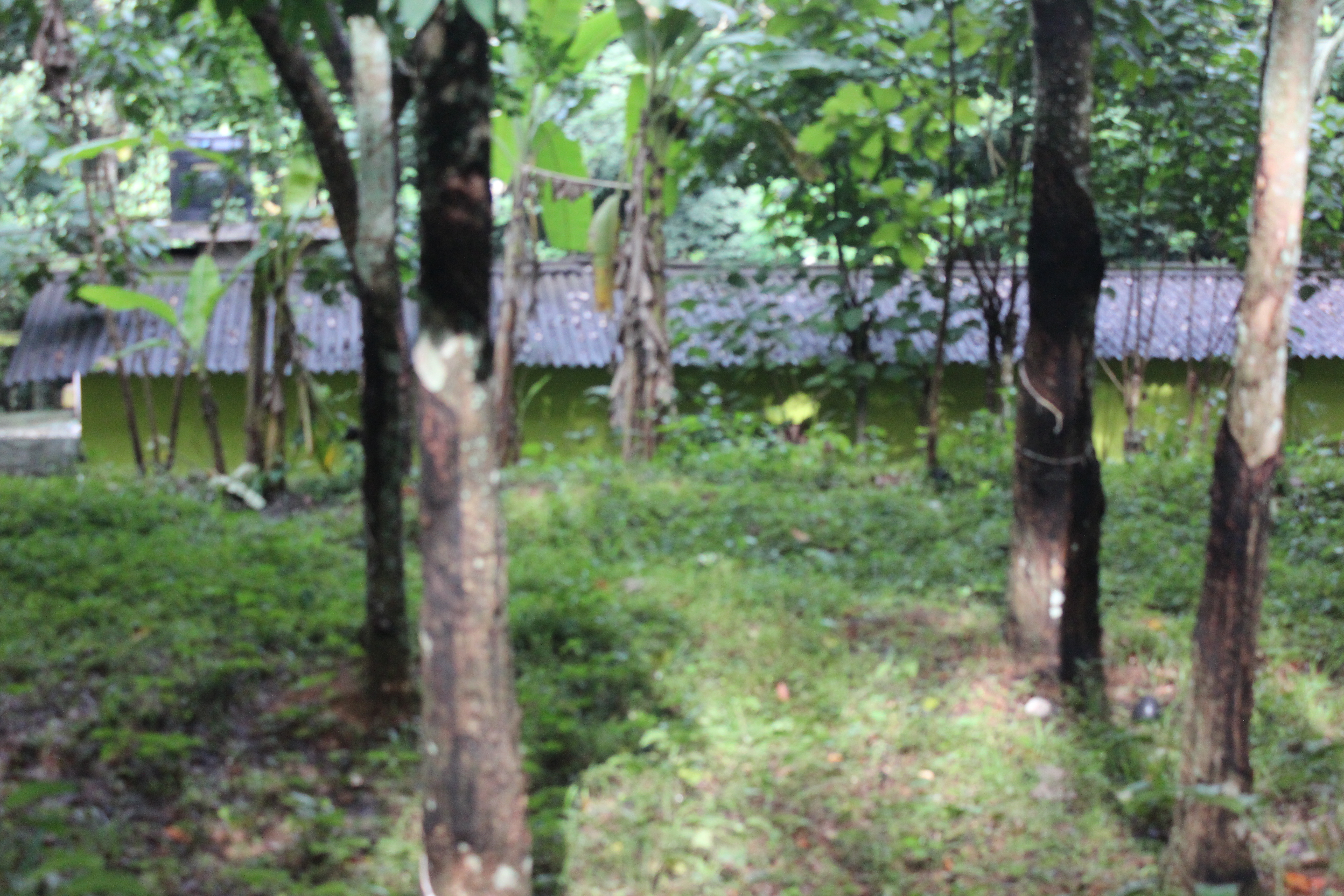 65 Cents of Residential Land and Small Old house for Sale in Adoor Municipality