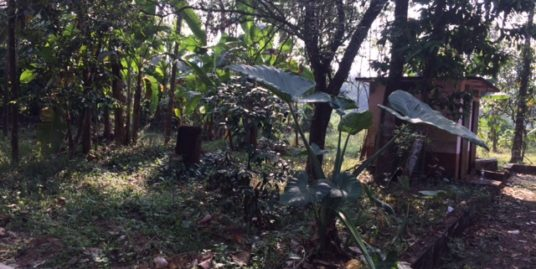 91 Cents of Plot for Sale in Vazhithala, Thodupuzha