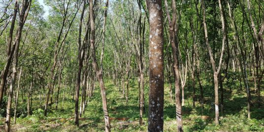 65 cents of Land for Sale in Pathanapuram, Kollam