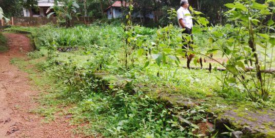 24 House Plot for Sale near Ernakulam at Affordable Price at Peppathy near Chinmaya International