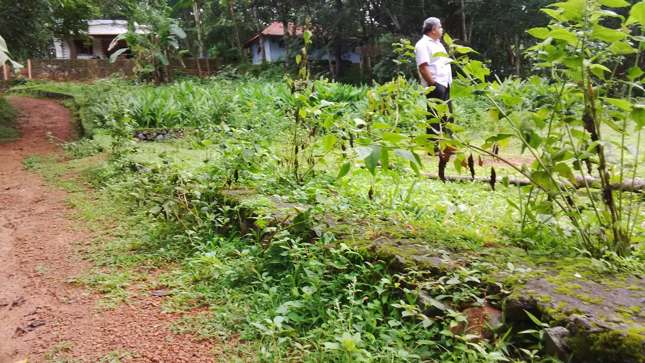 24 House Plot for Sale near Ernakulam at Affordable Price at Peppathy near Chinmaya International