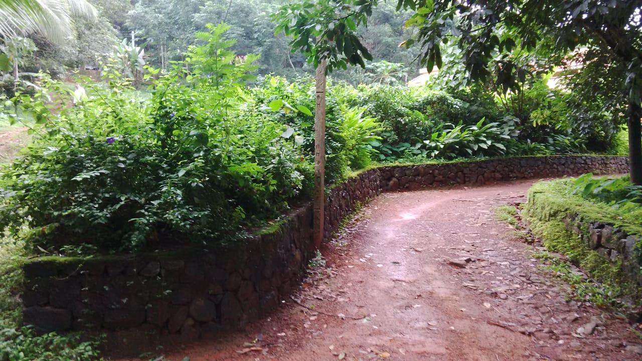 24 Cents Residential Plot For Sale Near Ernakulam