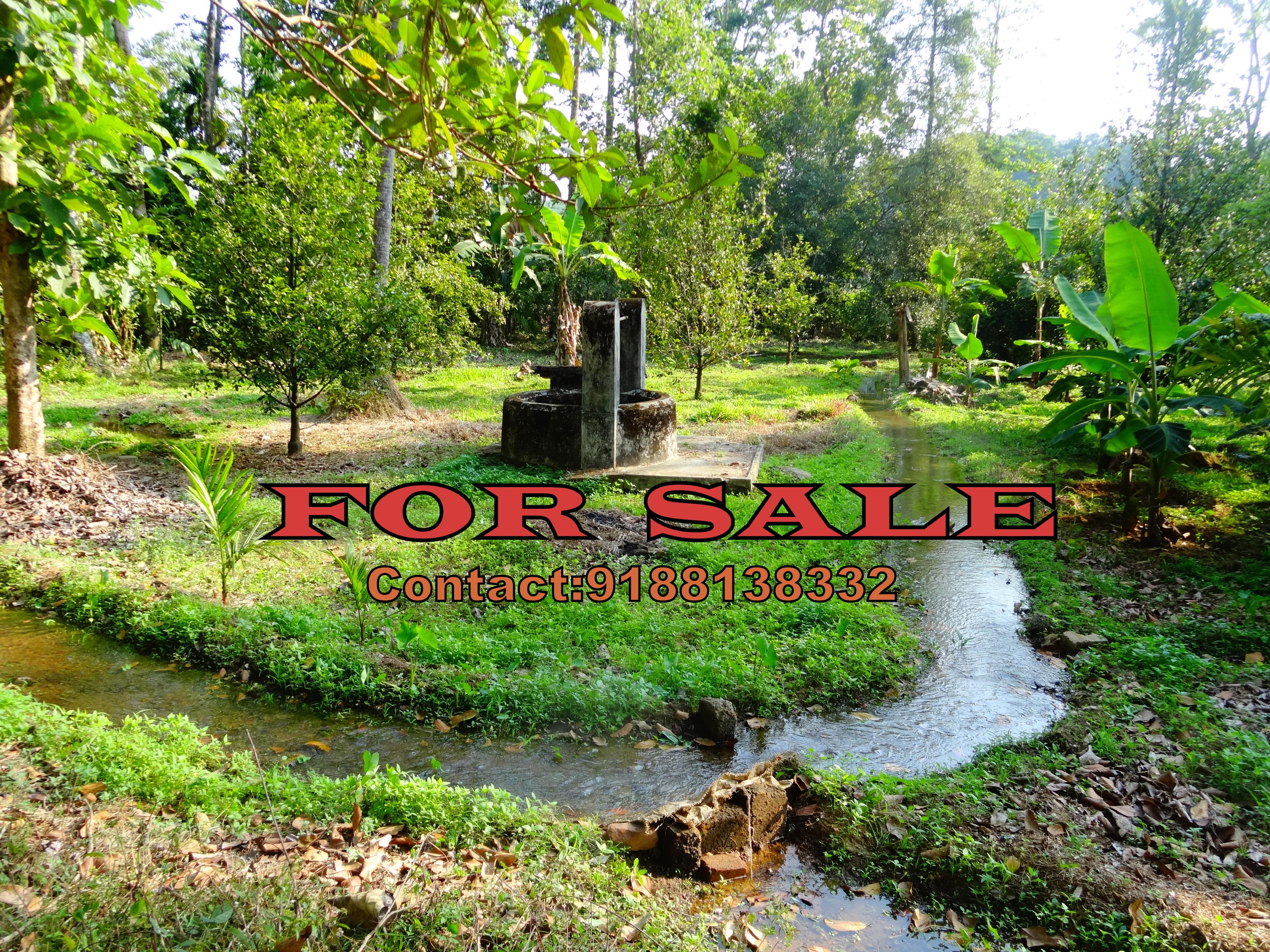 25 Cents Residential plot for sale Velloor, Mavallooor, Piravom