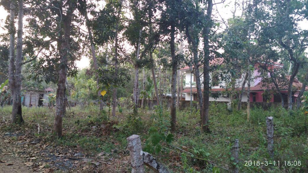 28 Cents Land for Sale Near Thekkekara (PO), Ponnezha society, Mavelikkara