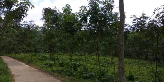 30 Cents House Plot for Sale near Pala