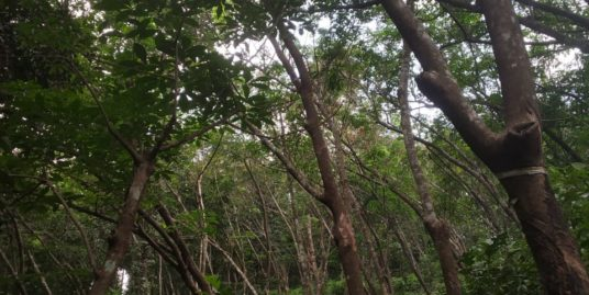 5.7 acres Rubber Estate For Sale  at Eerood, Kodencherry Panchayat, Kozhikode , 9496205128