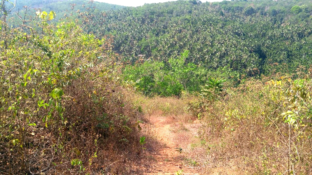 1.75 acre land for sale in Munnad, Kasargod