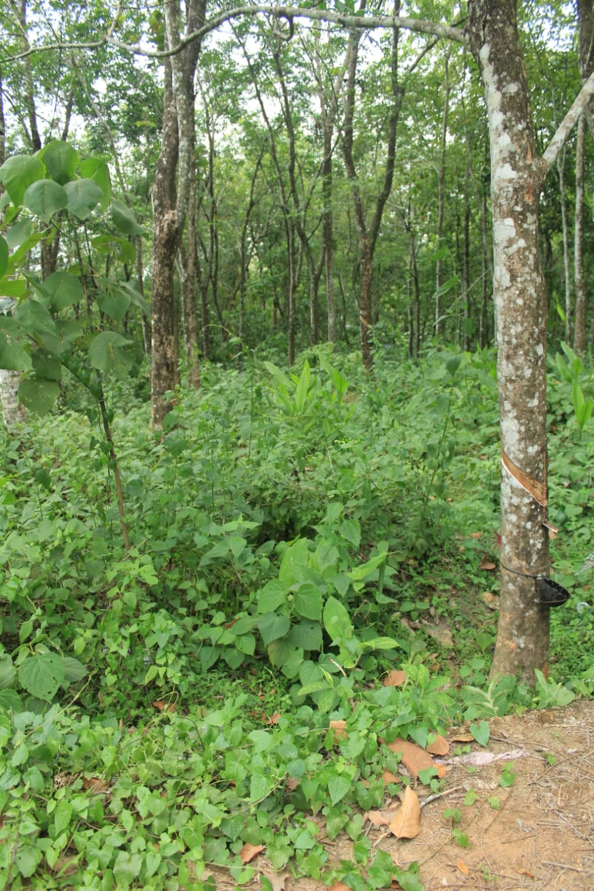 75 cents and 42 Cents of land For Sale at vellavoor village, Kottayam