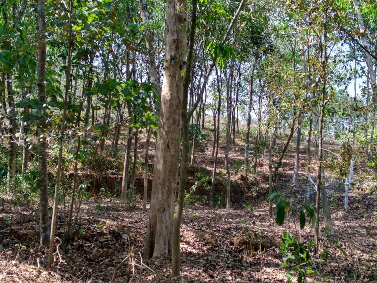 140 cents of land for sale in Peppathy (Veliyanad), near Arakunnam in Ernakulam District