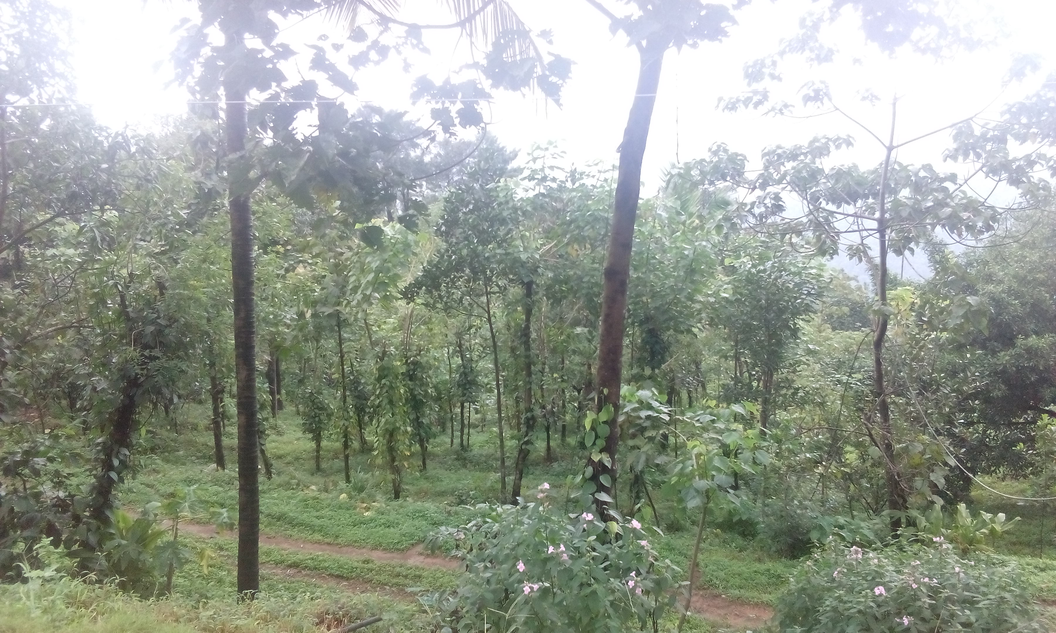 3.30 acre and 1 acre agricultural land for sale . Good for resorts