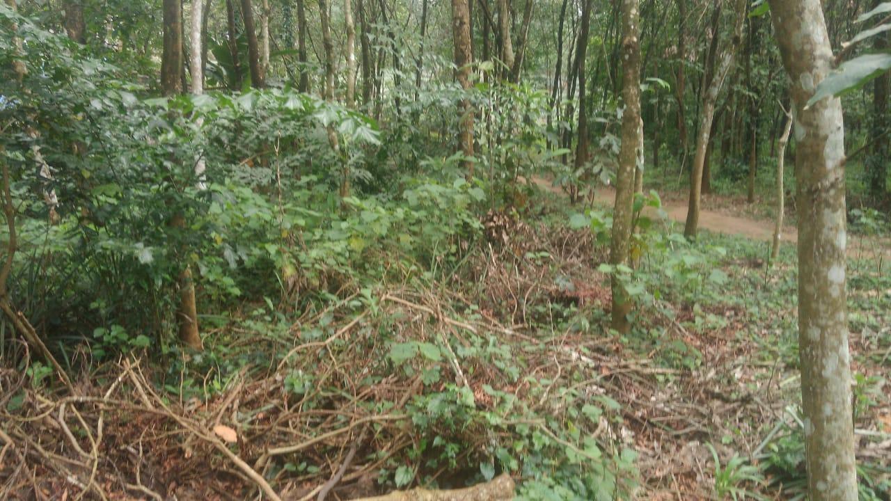 68 cent plot for sale near Cheruvattoor, Kothamangalm