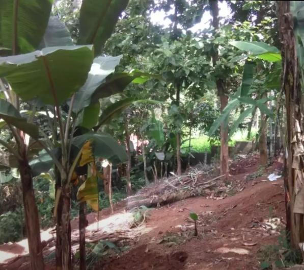 10 cent property and thrikannapuram