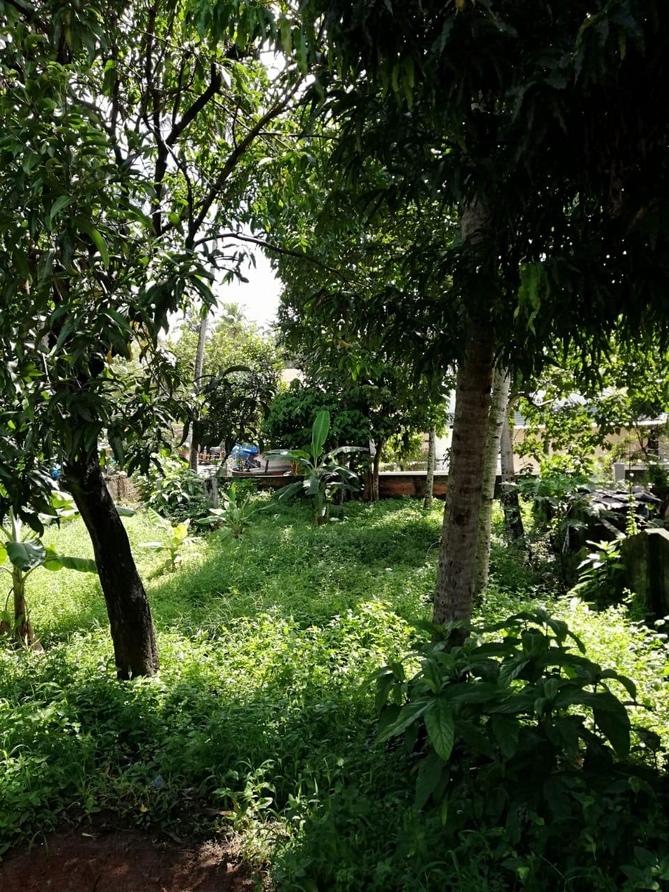 Vattiyoorkavu – Thittamangalam Junction. Prime Property