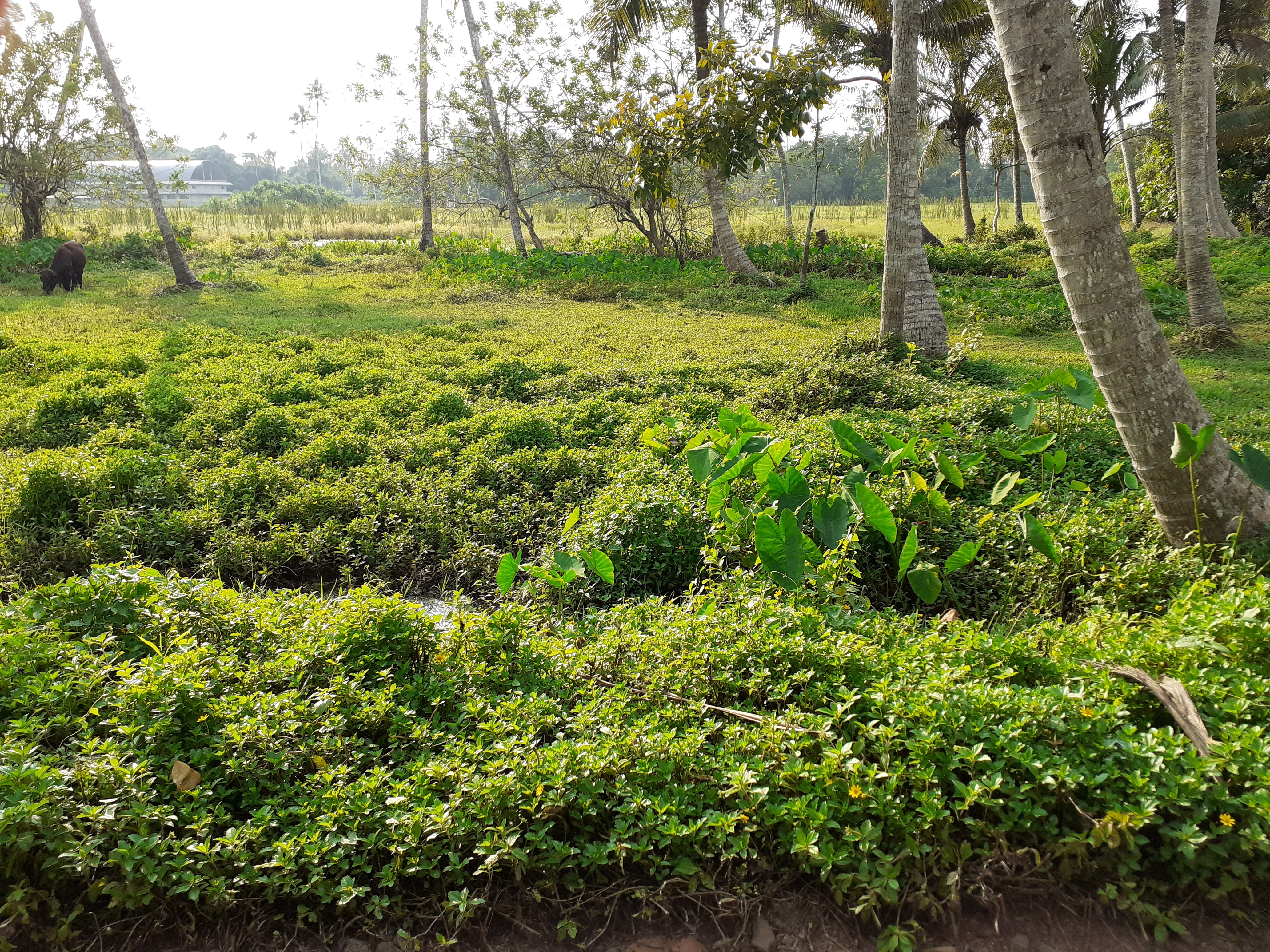 Land For Sale in Thuravoor Alappuzha